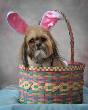 """...""""this isn't egg-zactly what I had in mind when you said let me take your picture for Easter"""""""